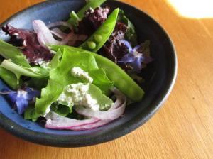 Titre : Salade du terroir (Jardins du Havre Vert, Champs Marins, Biquettes à l'air) Crédit : Coco-Simone Finken